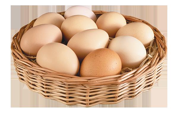 Quả trứng ~ LOTS